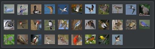 http://www.findnature.com/oiseaux/mosaique-oiseaux.jpg